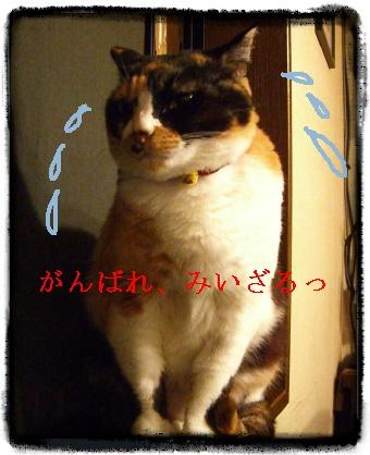 Image3431118